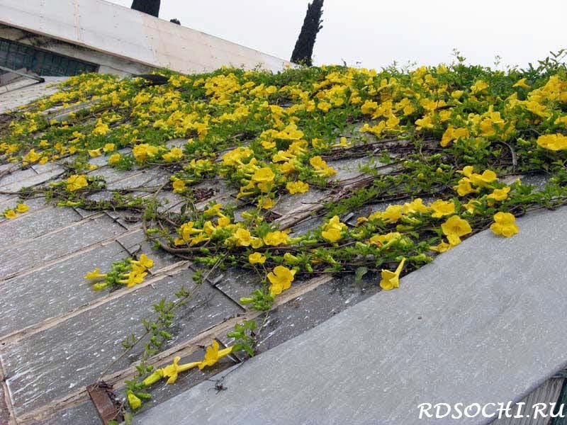 И другие вьющиеся растения